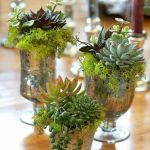 mini centres de tables rétro avec plantes grasses