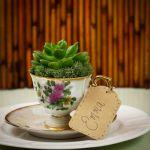 mini succulente dans tasse en porcelaine avec soucoupe